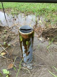 池を作るのに湧水が出てたとこからパイプでひっぱってきたんですけど、水が出てるとこにこんな藻みたいなのが発生してるんですが、水質に問題あるんでしょうか??