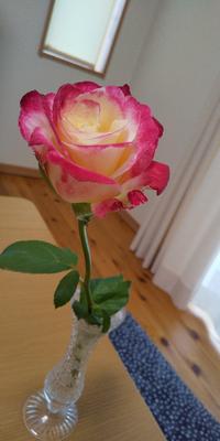 写真の薔薇の名前わかる方教えて下さいm(__)m