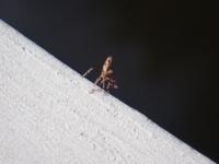 この虫さんの名前教えて下さい。とても小さい虫さんです。