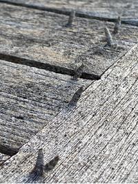 庭にある木製の椅子やテーブルに虫が大量発生しています。 この虫をご存知の方いませんか。 どのように対処したらいいでしょうか。
