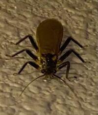 なんという昆虫ですか? 種名を教えてください。