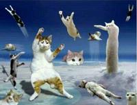 このネコのコラ画像のなるべく画質が良いものを探しています。 「ネコ コラ画像 たくさん」などそれらしいワードで何度か検索してみたのですが、違うネコのコラ画像が色々出てきて、欲しいものが思うように出てきません。 何かいい検索ワードはありますか?
