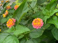 この植物の名前はなんでしょうか?