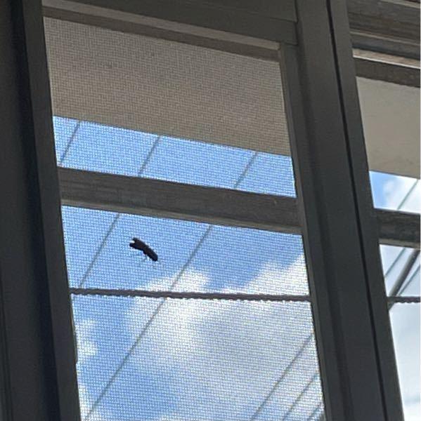 家の庭に8月下旬から9月頭にかけて黒い羽の大きな虫が地面に穴をほって巣を作っています。 特徴はアリをハチくらいのサイズに拡大したようなフォルムで大きな羽をもって黒いです。胸と腹のつなぎ目のクビレはそんなに細くありません。たぶん晩夏から秋にかけて地中に巣を作る習性があります その虫の名前の心当たりがある方は回答お願いします 下の画像のような(わかりにくいかもしれませんが)無視です