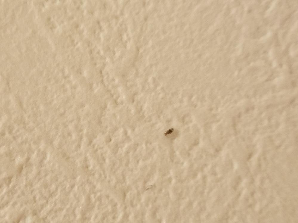 ワンルームマンションなのですが 最近よく壁や天井にこのような小さな2ミリ程の虫がいます。 なんの虫でしょうか? 対策などはどのようにすればよろしいでしょうか? 生ゴミなどはこまめにすてております。 ご返信いただけますと幸いです。