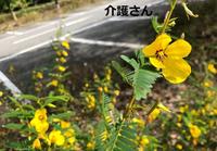 この植物の名前は何ですか? 撮影日は2021年9月1日で撮影場所は兵庫県です。 よろしくお願いします。