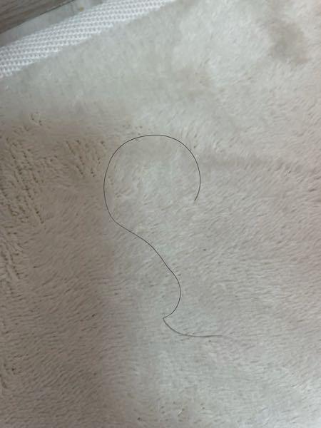 髪の毛について(写真あり) 私は全体的にはストレート髪なのですが、ちょこちょこアホ毛があり、その髪だけチリチリ?そして引っ張ると簡単に抜けます。何故こういう髪が生えてきてしまうのでしょうか… 気になって抜いてしまうのですが、何か改善方法はありますか?
