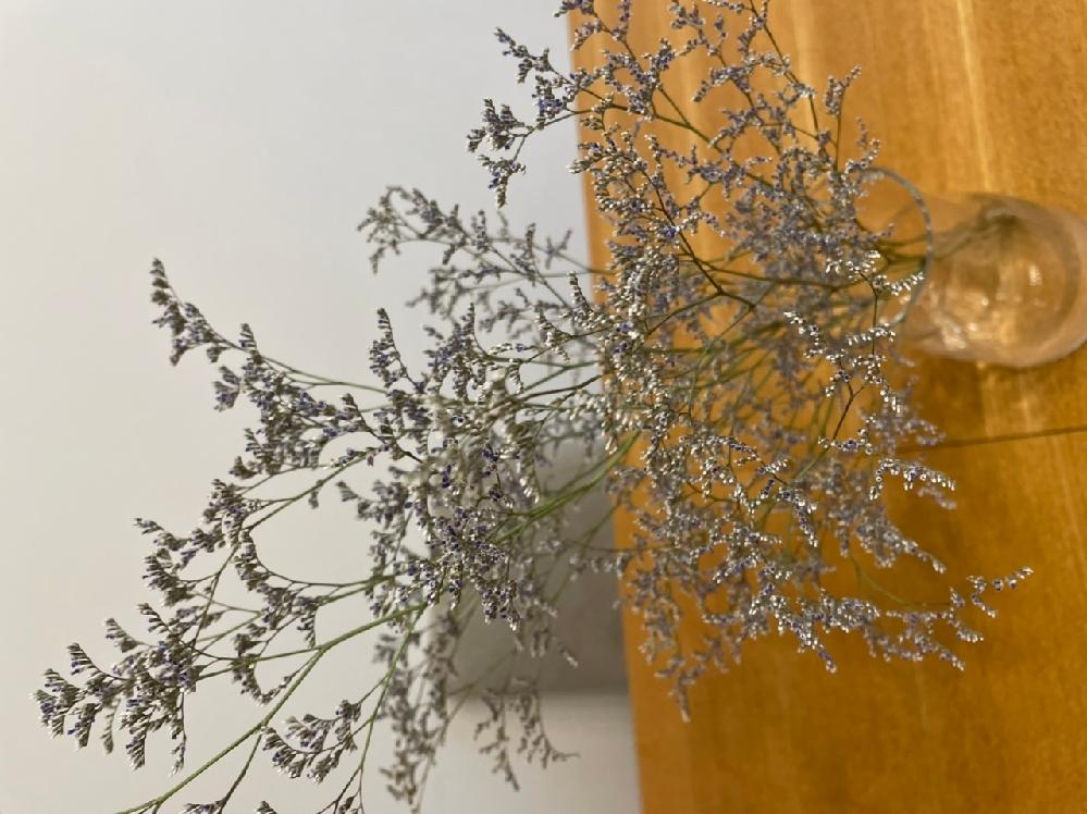 この花の名前が知りたいです。 花瓶に入れているのですが、一週間経っても全然枯れる気配がないので、なにものなのか気になりました。よろしくお願いします。