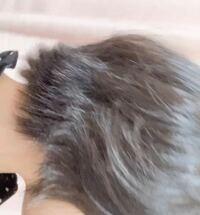 ストレートアイロンで外ハネにすると不自然になるのですがどうすれば良いでしょう? 何かコツなどあれば教えて欲しいです。  一応縮毛矯正しています。今年の6月にしました。 髪の下らへん縮毛矯正が取れかかっています...。  お見苦しい写真で申し訳ないです(>_<;)