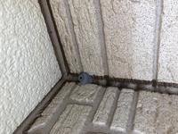 昨日でかめな蜂がベランダに居たのですが  これは蜂の巣ですか?