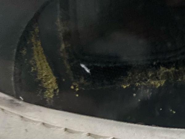 ベルクロの革スニーカーにこのようなカビ?が発生してしまったのですが、これはなんですか? 前に少し黄色いのが付着しているのを見かけて拭き取ったのですが、気づいたら再発生していました。
