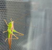 この虫何という虫でしょうか??体長は3センチ弱くらいです。