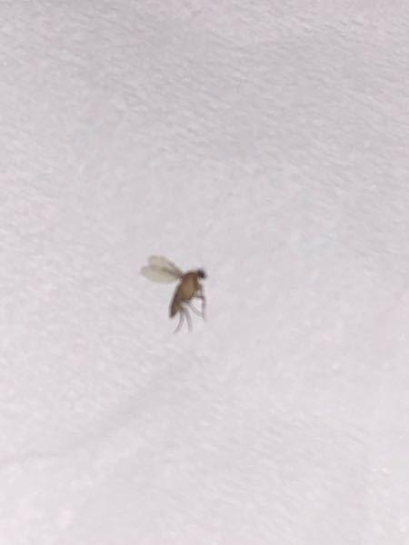 部屋によく出没するこの虫はなんですか?
