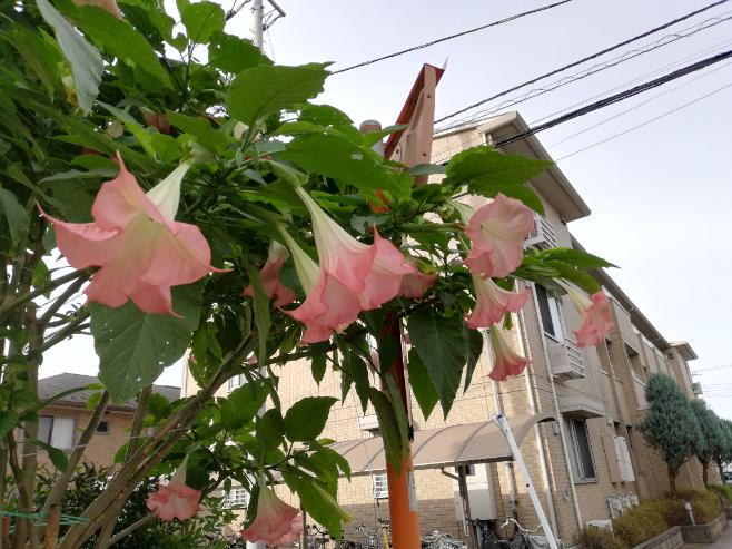この花の名前、お分かりになる方がいらっしゃいましたら教えて頂けませんでしょうか?m(_ _)m 花の大きさは15cm程ありました。