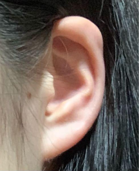 私の耳は軽く折れ耳なんですけど、アンテナとか 軟骨にピアスを開けたくて、この耳だとアンテナとか厳しいですか?上の軟骨の部分は完全にくっついててほぼ1枚みたいな感じです。