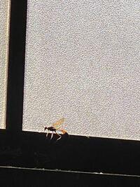 この虫はなんて名前ですか? 頭と胴体が離れているように見えてビックリしたので名前を知りたくなりました!!
