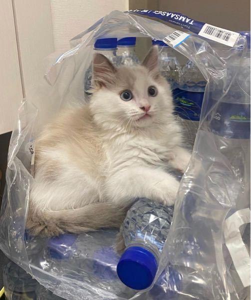 この猫の種類はなんですか?