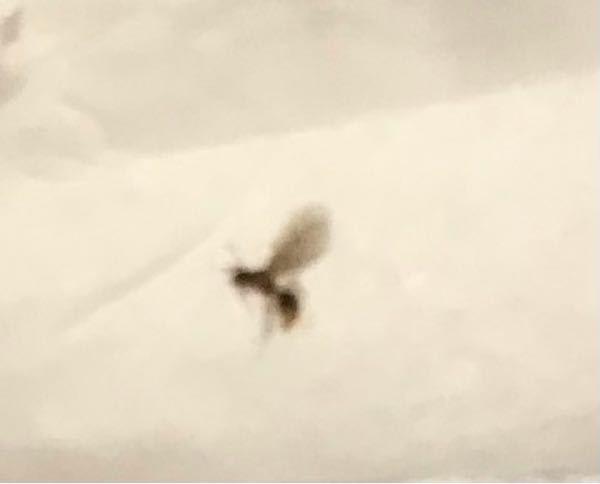 この虫が大量発生したのですがなんでしょうか? めちゃくちゃ小さいです