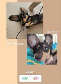 中国語の翻訳をお願いします。 Instagramのストーリーなのですが、 これはそれぞれなんと書いてあって 何を質問しているのでしょうか、、、?