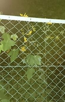 何と言う植物でしょうか?