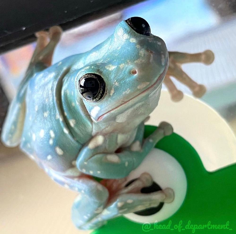 このカエルの名前、解りませんでしょうか?
