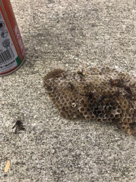 この蜂の種類はなんでしょうか? 雨戸シャッターの袋に蜂が巣を作っていましたので駆除しましたが、見慣れない蜂でしたので。。。
