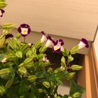 この花の名前を教えてください。よろしくお願いします。