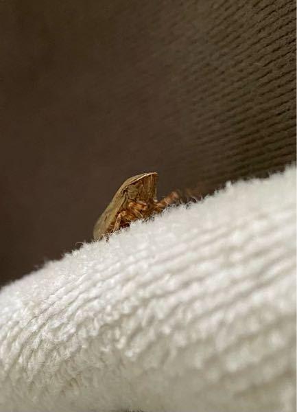 この虫は何という名前の虫なのでしょうか?
