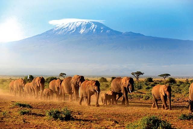 キリマンジャロを自分の目で見てみたいです。 自然の雄大さとかを感じるような旅をしてみたいのですが、画像のようにキリマンジャロが聳え立つまえのサバンナに動物たちがたくさんいるようなところに一般人が旅行で訪れることは可能ですか? 言葉はなんとなくの英語、予算は大学生バイトとかだと一人旅は厳しいですか?
