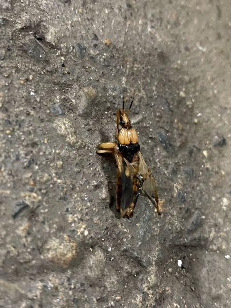 ズボンの上からいきなり刺されたのですがこの虫はなんでしょうか?