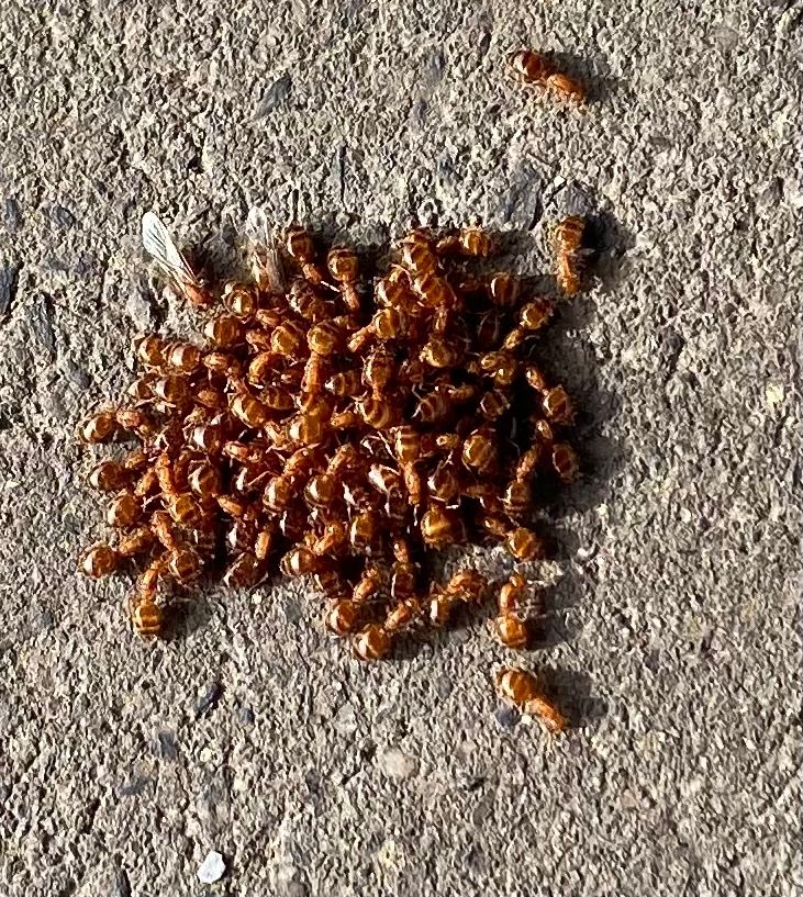 これは何というアリですか?