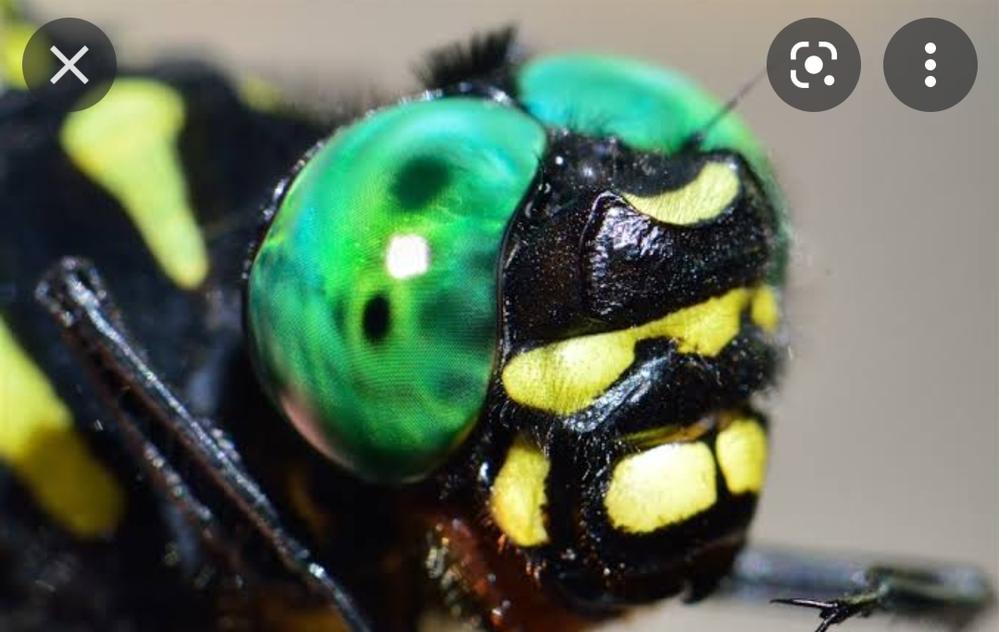 トンボの目を再現することってできますか? 小学2年生のときに始めてオニヤンマの複眼を見たときのあの、まるでゼリーのようなでも立体感のあるあの感動が今でも忘れられません。緑色で透明なおゆまる(お湯で柔らかくなる粘土)で試してみても少し違っていて、ビーズなども少し違います。あの複眼を再現する方法はないのでしょうか?材質等はこだわりません