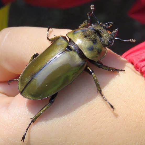【至急】この昆虫の名前分かりますか?