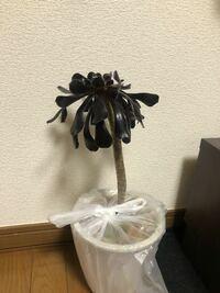 この植物はなんですか? もらったのですがなんの木なのかわかりません。花が咲くのでしょうか?家の中で育てられる観葉植物? わかる方教えてください。