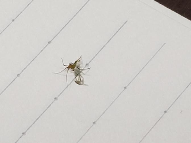 これなんて言う虫ですか?