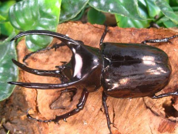 この昆虫の名前知っていますか? 至急です!