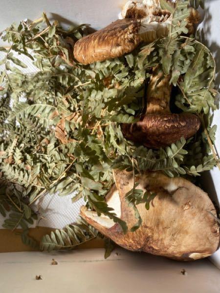急募です。親戚から松茸が届きました。 野菜庫に入れる際はどうしたら良いでしょうか?