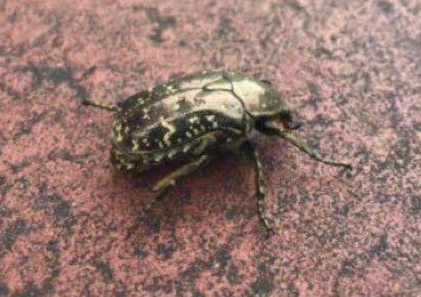 【至急】この昆虫の名前教えてください