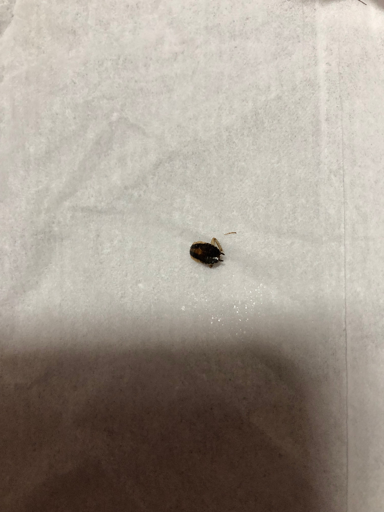 転勤で北海道から長崎に来ました。家にこんな虫が出ました。1センチ位で、すばしっこいくすっと物かげに見えなくなります。ゴキブリでしょうか?実物のゴキブリは見た事はありません。宜しくお願いします。