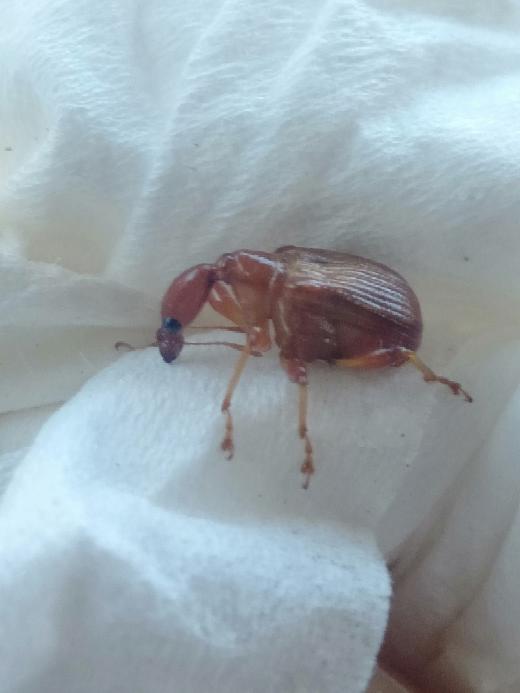 山で発見しました 初めて見る虫なのですが 何と言う名前の虫かわかりますか?