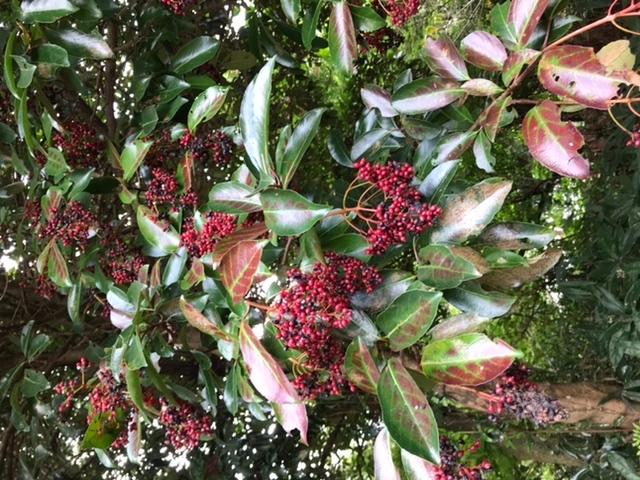 これは何という植物でしょうか?