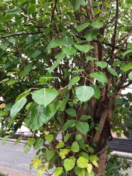 この木の名前を教えてください