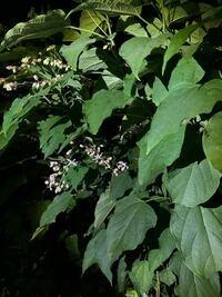 植物について質問です。 この植物は一体何という植物なのでしょうか?