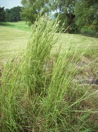 昨日カヤを草刈機で刈ったのですけど!刈ってても又出てくるから除草剤で根まで枯らそうt思います何月ごろ除草剤をやればいいですか?