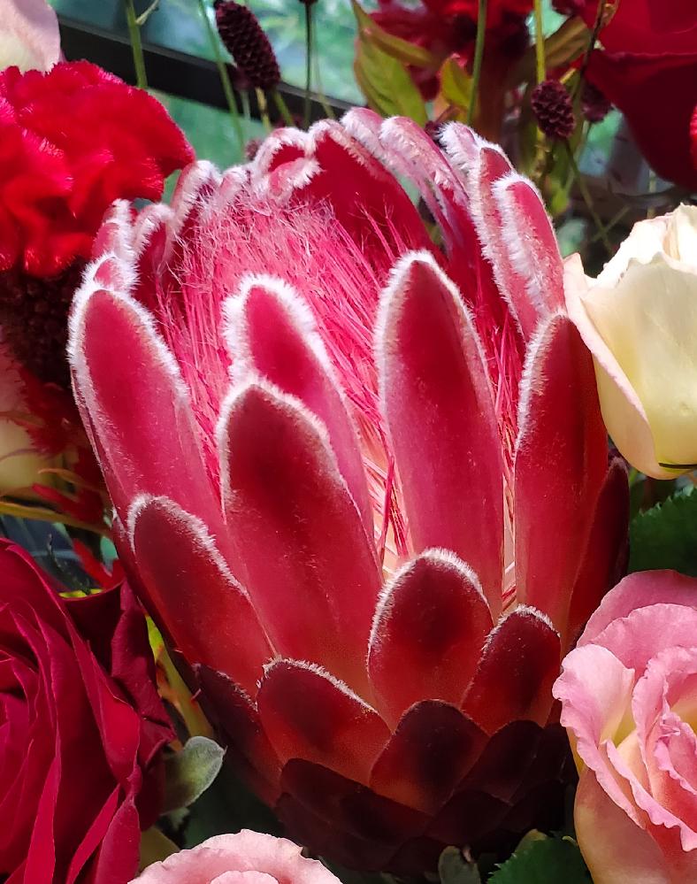 こちらの花をいただいたのですが、この画像にあるウロコのような花弁の花の名前が知りたいです。 詳しいかたよろしくお願いします。