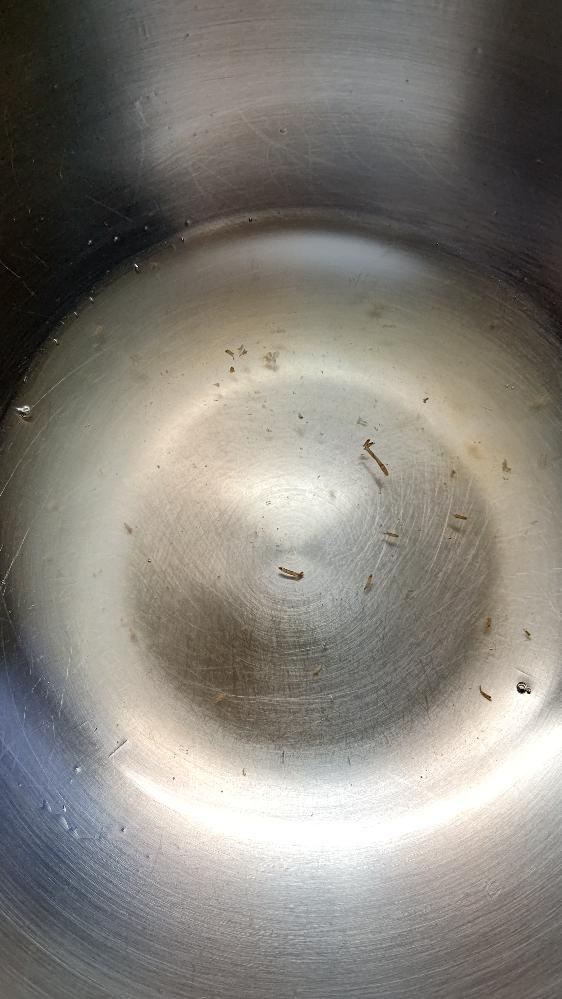 落葉、ボリボリを頂きました。 20時間ほど塩水につけ、その後2分ほど熱湯処理しましたが、ザルに開けたきのこから出た水が画像のものです。 これは虫でしょうか?