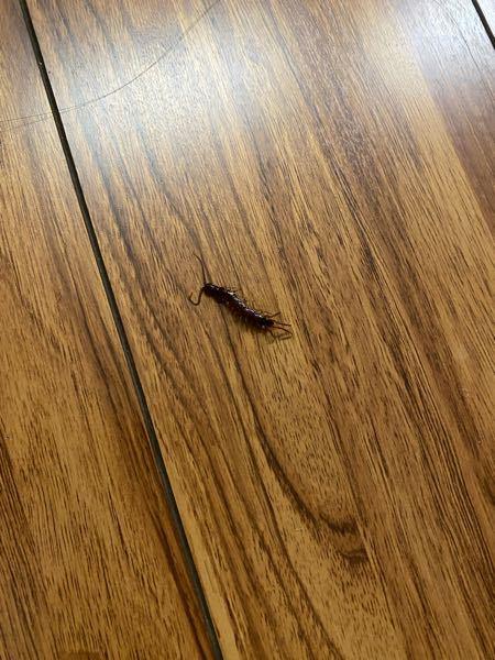 北海道の道東地区に住んでいるものです。 よく家にこの虫が出るのですが、 毒はあるのでしょうか? 誰か教えてください、お願いします。