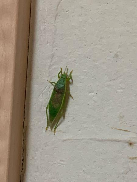 これなんの虫ですか? 害虫ですか?(;_;)