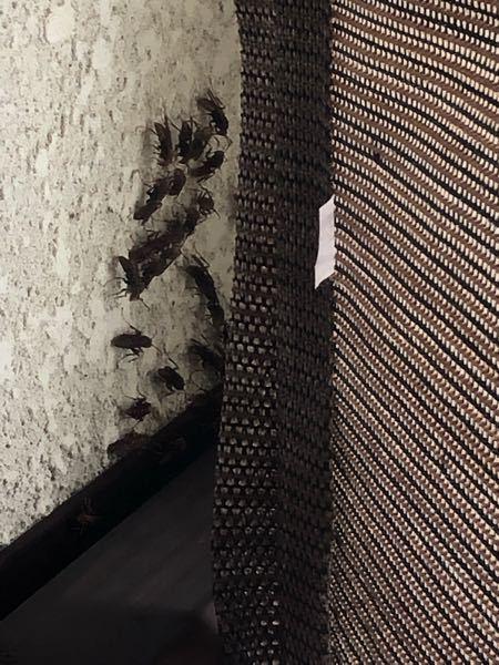 蜂に詳しい方に聞きたいんですけど こいつらずっと固まっててびくともしてないんですよね何してるんですか?