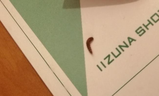 この虫は何ですか...? 自分の部屋に2匹もいたのですが、気持ち悪すぎて部屋に入れません震 部屋は綺麗にしていたつもりなのですが...